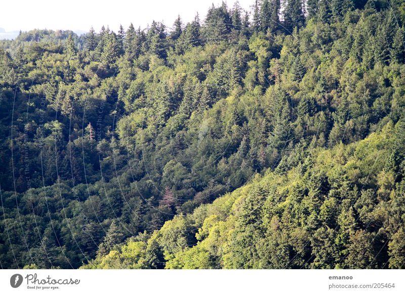 Waldsonne Natur Baum grün Sommer Ferien & Urlaub & Reisen ruhig Wald dunkel Erholung Berge u. Gebirge Freiheit Landschaft Umwelt hoch Ausflug