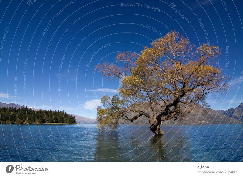 flooded Wasser alt Himmel Baum blau Wolken Einsamkeit Ferne Herbst Berge u. Gebirge See Landschaft Kraft warten glänzend nass