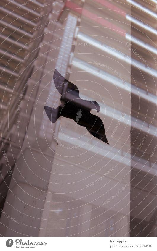 überflugsverbotszone Tier Fenster Vogel fliegen Hochhaus Wildtier Schutz Warnhinweis Etikett Glasscheibe Greifvogel abwehrend Hochhausfassade