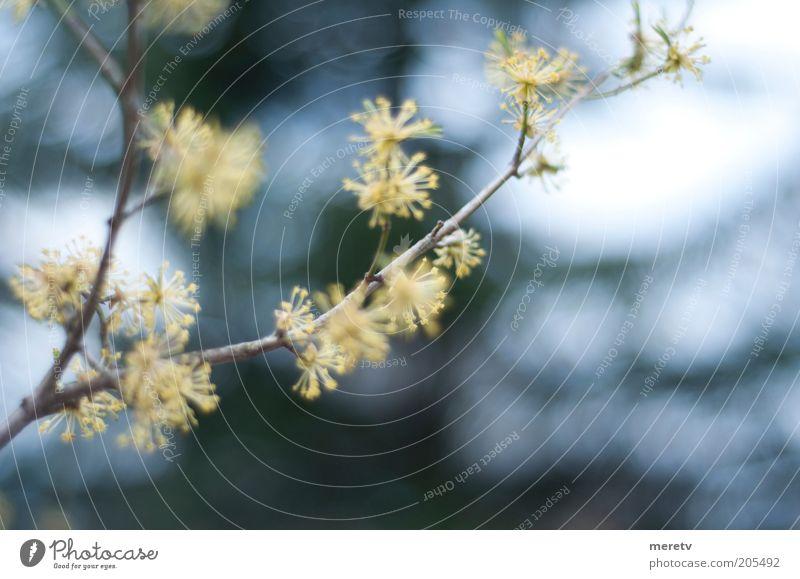 Natur weiß blau schön Pflanze Blume Einsamkeit gelb Blüte Frühling träumen gold frei natürlich wild Sträucher