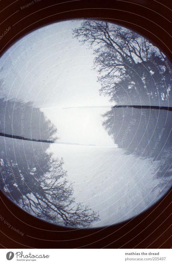 VERDREHT Umwelt Natur Pflanze Himmel Winter Klima schlechtes Wetter Nebel Schnee Wald außergewöhnlich dunkel kalt Doppelbelichtung rund Fußweg verkehrt Farbfoto