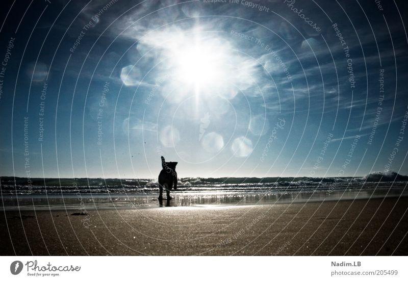 waterdog Wasser Sonne Sommer Strand Freiheit Hund Sand laufen frei rennen Lebensfreude Flucht Schönes Wetter Freude toben Blendenfleck