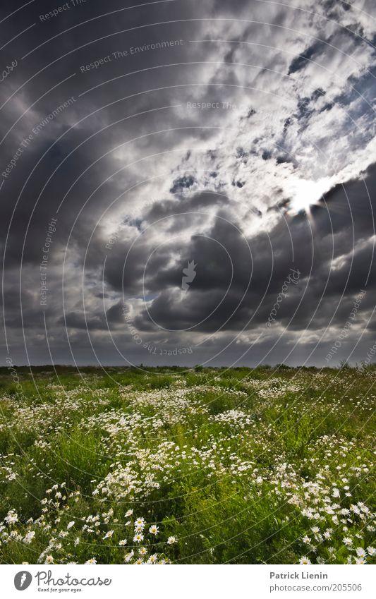 Juni Natur schön Himmel Sonne Blume Pflanze Sommer ruhig Wolken Wiese Blüte Landschaft Luft Wind Umwelt Horizont