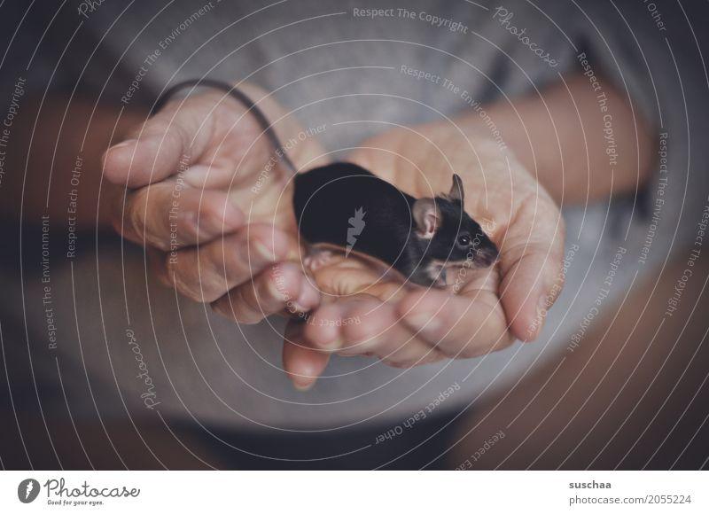 schwarze maus Hand schwarz Angst Haut Finger niedlich Schutz festhalten Fell Haustier Geruch Säugetier Maus Ekel Schwanz zerbrechlich