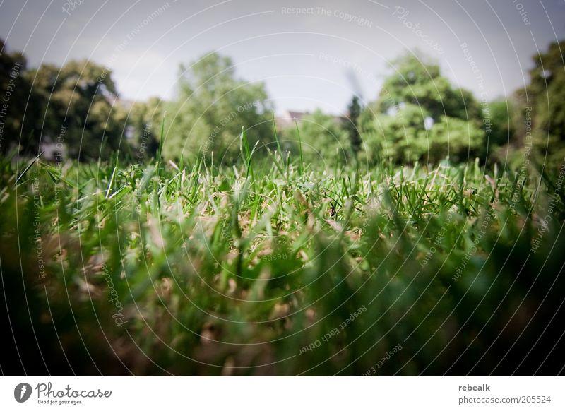 Grasnarbe Natur grün Pflanze Sommer Wiese Erde Rasen kurz
