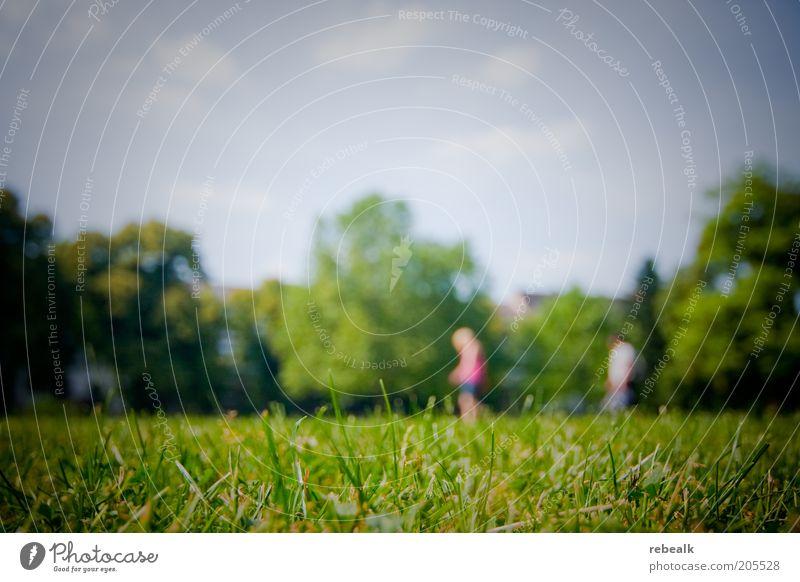 Platzsuche Sommer Paar 2 Mensch Natur Landschaft Schönes Wetter Gras Park Wiese grün Außenaufnahme Textfreiraum oben Unschärfe Weitwinkel Grasnarbe Rasen