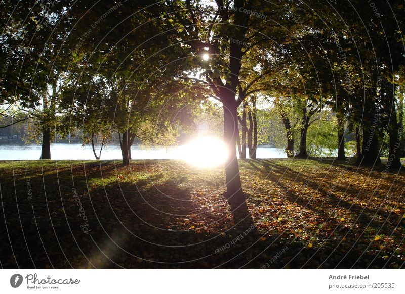 Herbstsonne Berlin Umwelt Natur Pflanze Wasser Sonne Sonnenaufgang Sonnenuntergang Sonnenlicht Schönes Wetter Baum Park Wald Flussufer Menschenleer braun grün
