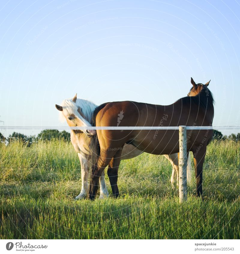 Verbotene Liebe Natur grün schön Tier Wiese Zusammensein Tierpaar natürlich Pferd Neugier berühren Weide Geruch Interesse Verliebtheit Ponys