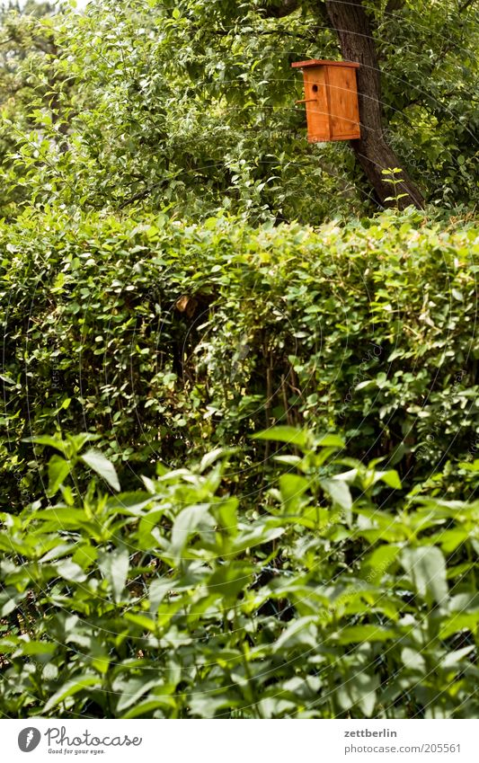 Starkasten Baum grün Pflanze Blatt Garten Baumstamm Hecke Schrebergarten Blattgrün Futterhäuschen Nistkasten Brutkasten Kleingartenkolonie