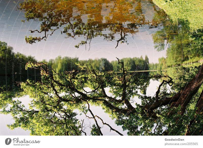 Spieglein, Spieglein Umwelt Natur Urelemente Erde Wasser Himmel Pflanze Baum Park Seeufer hell schön Wärme braun gold grün Stimmung Farbfoto Außenaufnahme