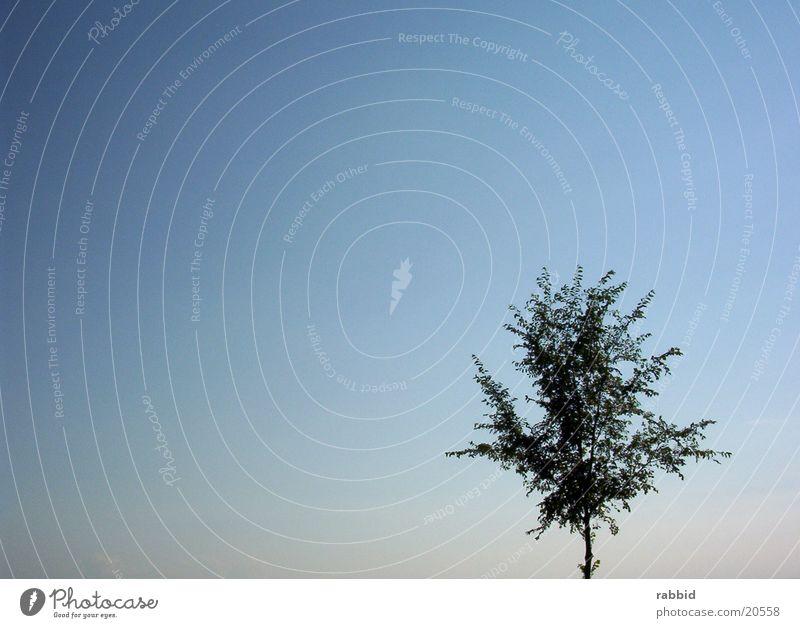Freibaum Himmel Baum blau rechts