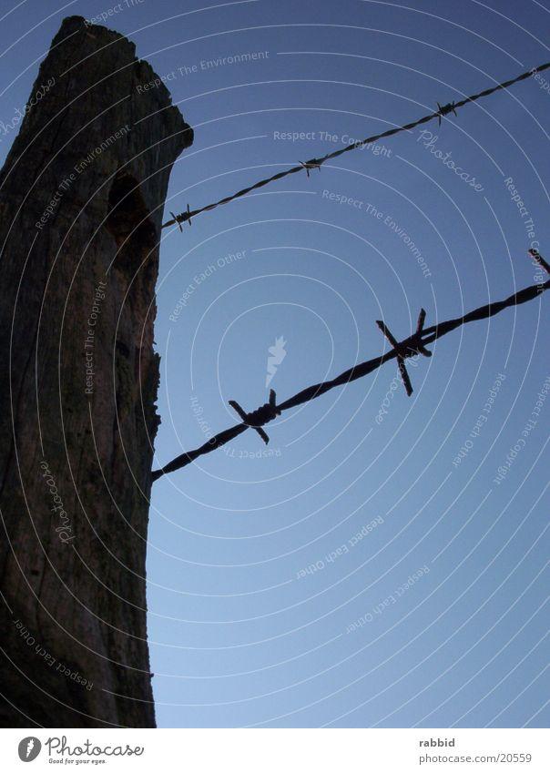 Stacheldrahtzaun Zaun Schönes Wetter Blauer Himmel Stacheldraht Stacheldrahtzaun