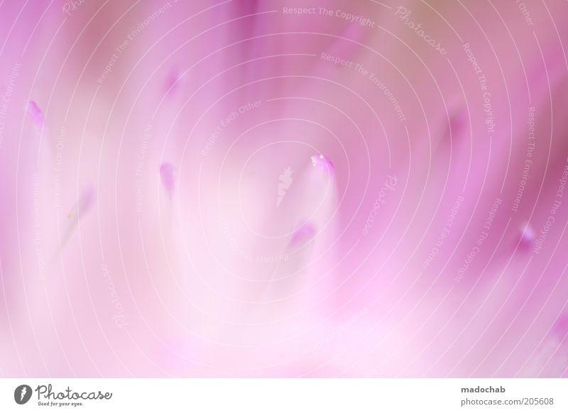 pink panic Natur Blume Pflanze ruhig Farbe Blüte rosa ästhetisch weich violett zart harmonisch abstrakt diffus Inspiration Verlauf