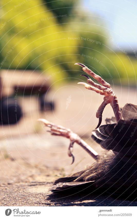 Ende Gelände Tier Tod Vogel Angst liegen dreckig Feder Flügel Schönes Wetter bewegungslos Krallen Entsetzen Detailaufnahme Totes Tier