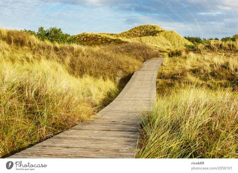 Landschaft in den Dünen auf der Insel Amrum Erholung Ferien & Urlaub & Reisen Tourismus Natur Wolken Herbst Baum Sträucher Wald Küste Nordsee Wege & Pfade blau