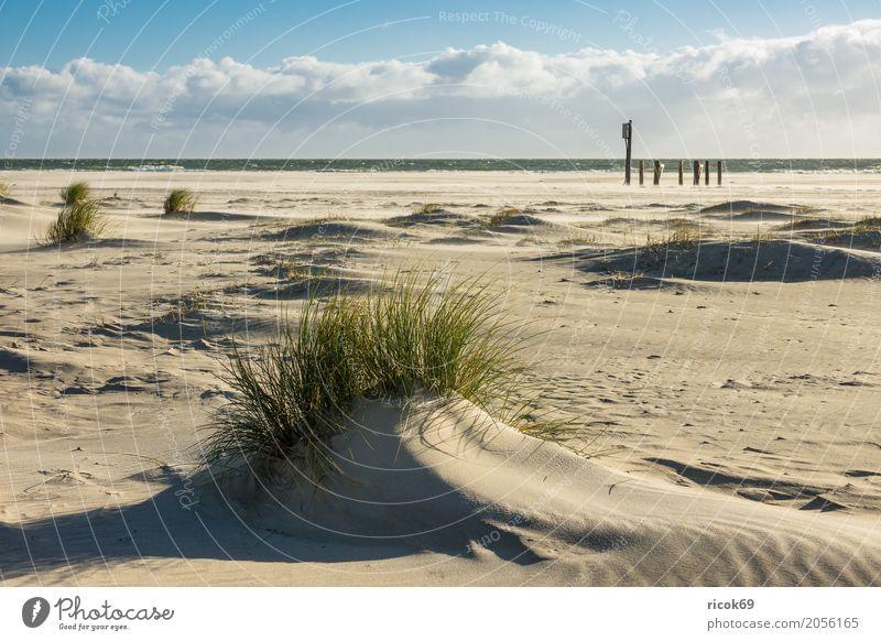 Landschaft in den Dünen auf der Insel Amrum Erholung Ferien & Urlaub & Reisen Tourismus Strand Meer Natur Sand Wolken Herbst Küste Nordsee blau gelb