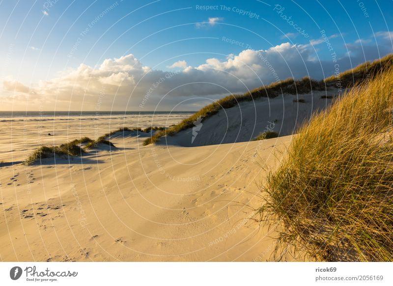 Landschaft in den Dünen auf der Insel Amrum Natur Ferien & Urlaub & Reisen blau Meer Erholung Wolken Strand gelb Herbst Küste Tourismus Sand Nordsee
