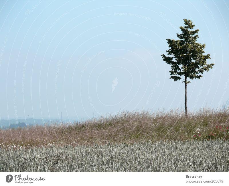 Der Baum. Natur Himmel blau Pflanze Sommer Ferien & Urlaub & Reisen Einsamkeit Ferne Wiese Gras Berge u. Gebirge Freiheit Umwelt Erde Ausflug