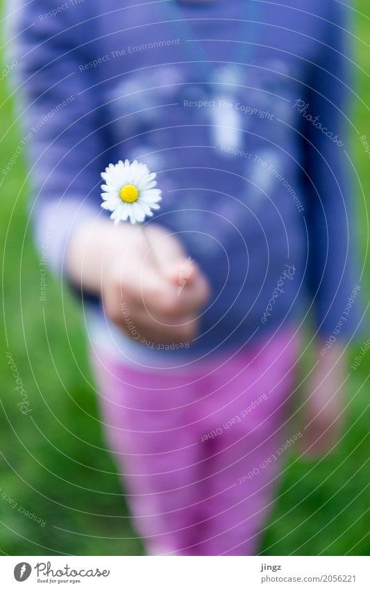 Ein Blümchen für dich feminin Mädchen Körper Hand 1 Mensch Frühling Schönes Wetter Baum Blüte Blühend festhalten frisch hell weich gelb violett rosa weiß