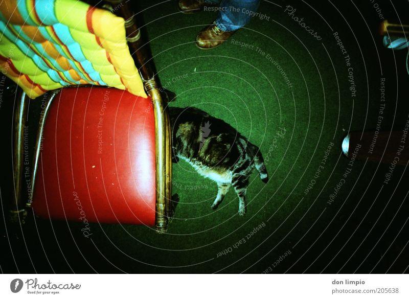 Playing Dead Schuhe Haustier Katze Pfote 1 Tier Häusliches Leben dick hässlich kuschlig retro trashig grün Zufriedenheit Gelassenheit Trägheit bequem skurril