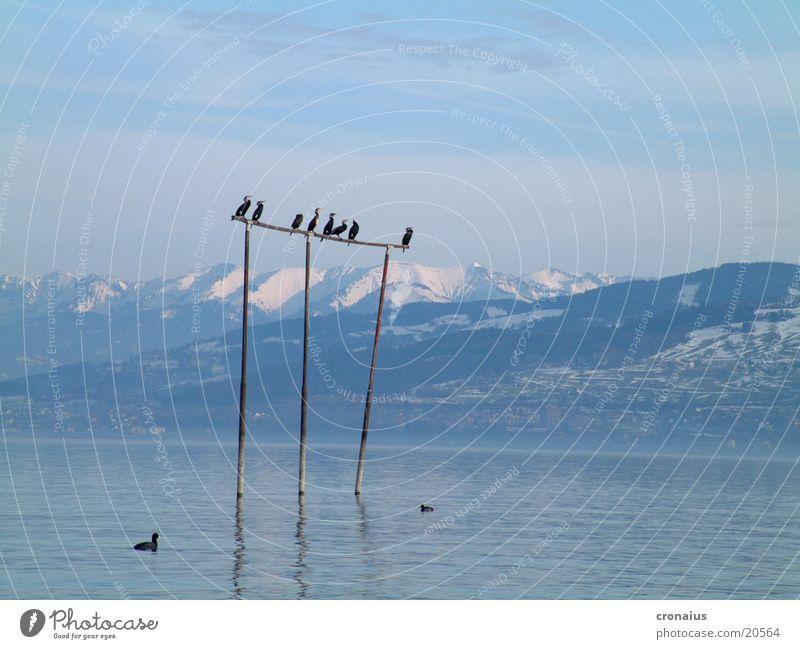 hoch hinaus Schnee Berge u. Gebirge See