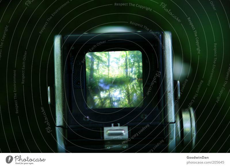 Durchblick Umwelt Natur Urelemente Wasser Pflanze Baum Fotokamera grün Farbfoto Außenaufnahme Menschenleer Schwache Tiefenschärfe Fotografie Fotografieren
