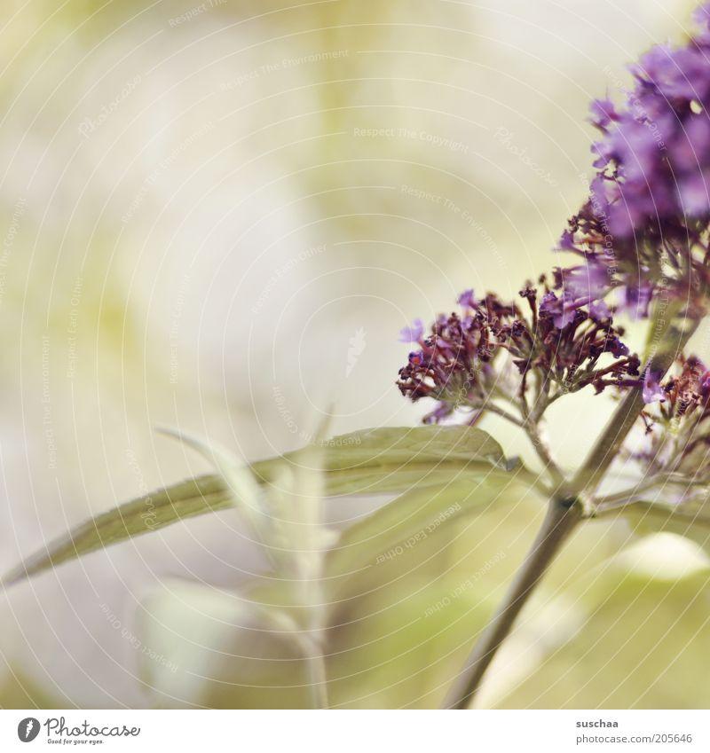 mädchenfototag Umwelt Natur Pflanze Frühling Sommer Klima Wetter Blume Wildpflanze Blühend verblüht Wachstum Duft schön Wärme wild grün violett Vergänglichkeit