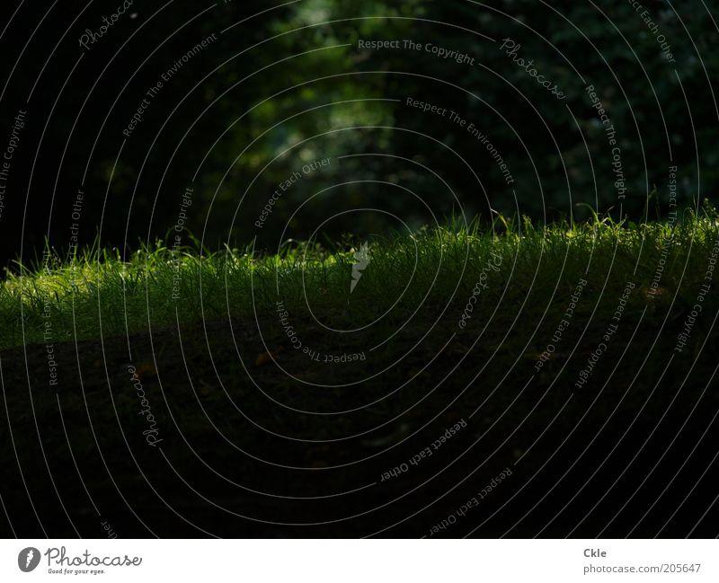 Lichtung Natur Baum Sonne grün Pflanze Sommer ruhig Einsamkeit Erholung Wiese Gras träumen Park Erde geheimnisvoll Idylle
