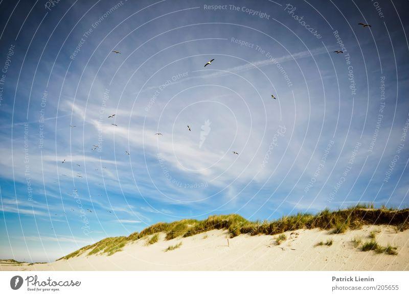forgotten island Umwelt Natur Landschaft Pflanze Urelemente Erde Sand Luft Himmel Wolken Sommer Wetter Schönes Wetter Hügel Küste Strand Nordsee Meer Insel