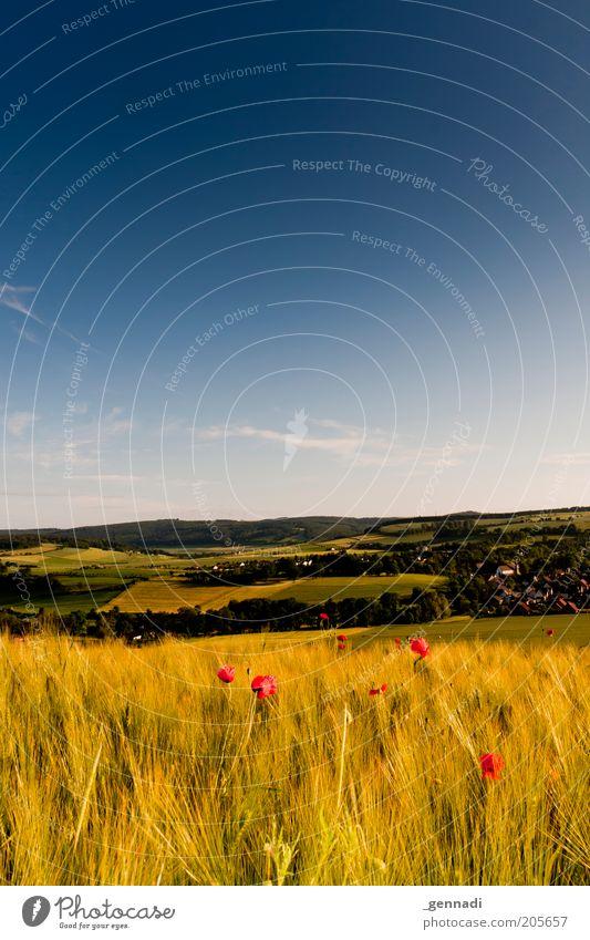 Weserbergland Natur schön Himmel Blume blau rot Sommer gelb Wiese Blüte Berge u. Gebirge Landschaft Luft Zufriedenheit Feld Umwelt