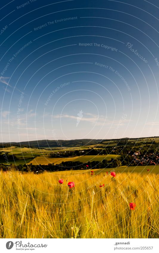 Weserbergland Umwelt Natur Landschaft Luft Himmel Sommer Schönes Wetter Nutzpflanze Weizenfeld Mohn Wiese Feld Berge u. Gebirge schön trocken ästhetisch
