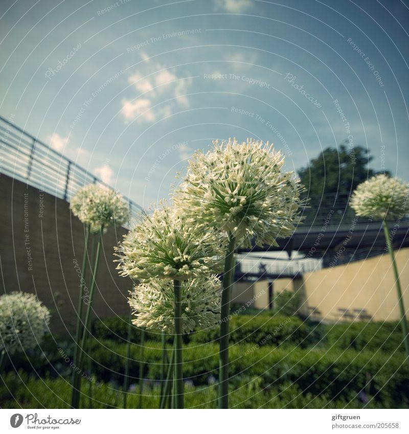 lots of dots Himmel Wolken Pflanze Blume Sträucher Blüte Grünpflanze Garten Park Menschenleer Mauer Wand groß modern Landschaftsarchitektur Gartenbau Kugel