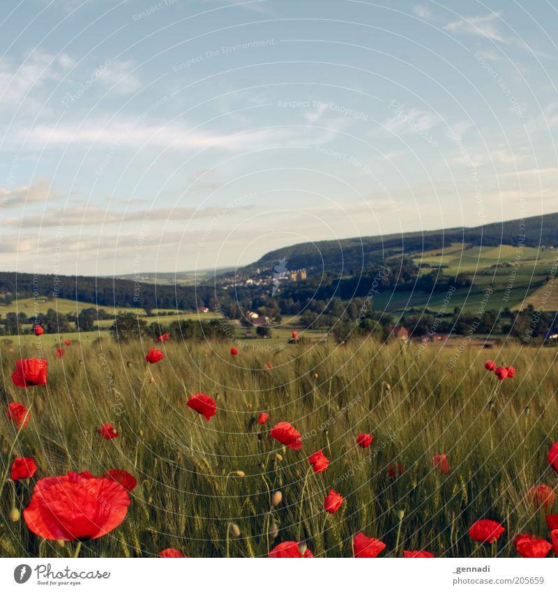 Idylle Natur schön Himmel grün blau Pflanze rot Wolken Ferne Wiese Blüte Gras Berge u. Gebirge träumen Landschaft Luft