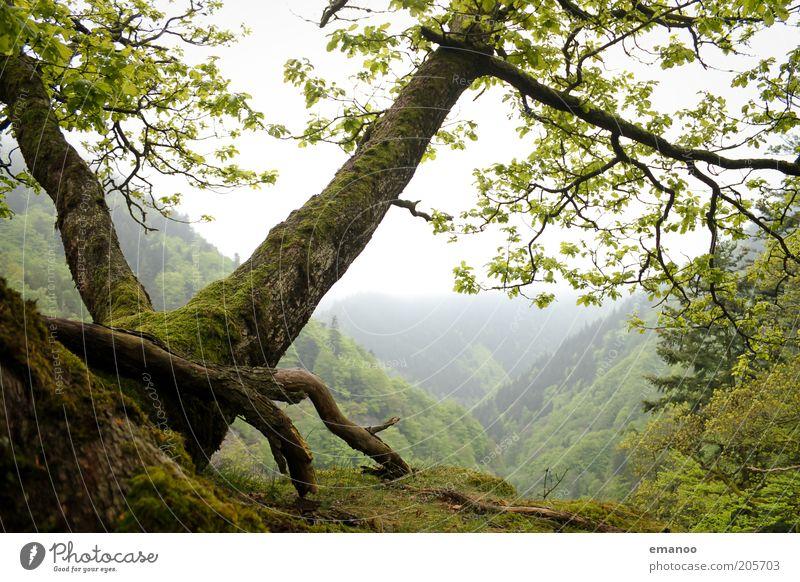 magic black forest Natur grün Baum Pflanze Sommer Ferien & Urlaub & Reisen Wald Freiheit Berge u. Gebirge Landschaft Umwelt Wetter Erde nass Ausflug Nebel