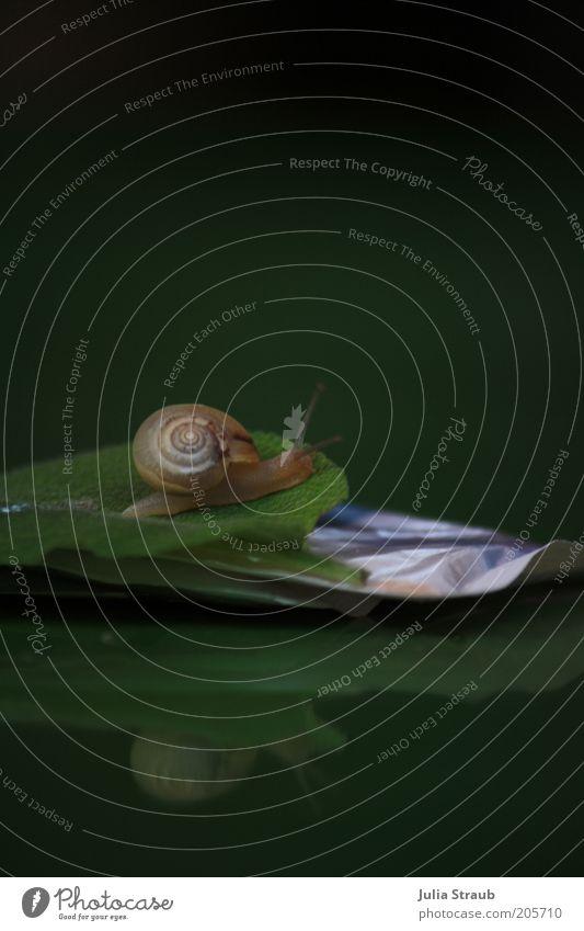 schnell weg Sommer Blatt Grünpflanze Tier Schnecke 1 Kunststoff Bewegung entdecken klein gelb grün Ziel schleimig Kriechspur Schleimspur Schneckenhaus Fühler