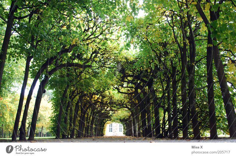 ins Grüne Natur Baum grün Sommer Ferien & Urlaub & Reisen Wege & Pfade Park groß Ausflug Platz lang Seite viele Baumstamm Allee Garten