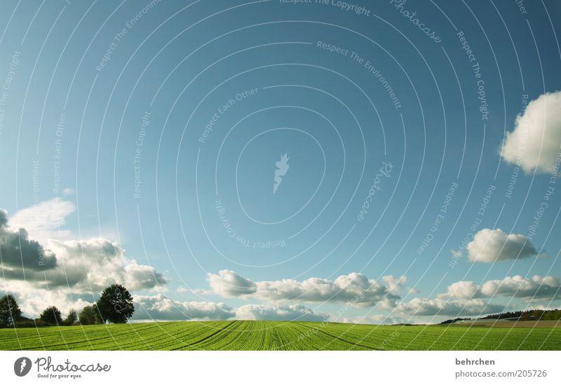 durchatmen Umwelt Natur Landschaft Himmel Wolken Frühling Sommer Schönes Wetter Pflanze Baum Gras Grünpflanze Nutzpflanze Wiese Feld Unendlichkeit
