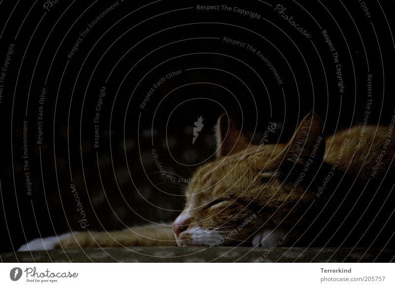 Tag32. ruhig dunkel warten schlafen Tiergesicht Fell Katze genießen Tier Geborgenheit Haustier Wohlgefühl Erschöpfung Hauskatze Zuneigung