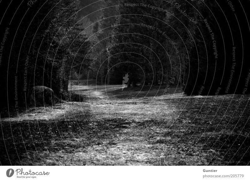 am Ende: Wolf,... Umwelt Natur Landschaft Pflanze Erde Baum Gras Sträucher dunkel gruselig kalt schwarz weiß Gefühle Angst Todesangst Wege & Pfade Düsterwald