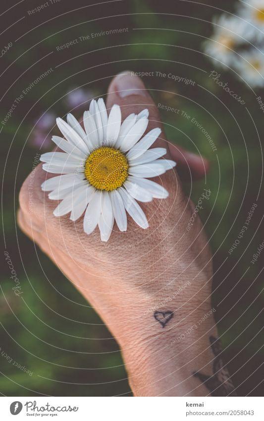 Durch die Blume, mitten ins Herz (III) Stil Wellness harmonisch Wohlgefühl Zufriedenheit Sinnesorgane Erholung ruhig Meditation Freizeit & Hobby Mensch Leben