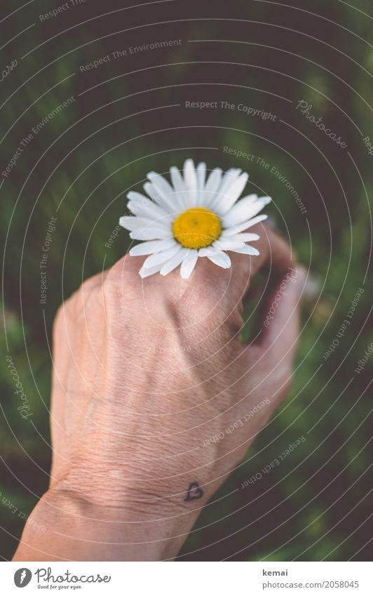 Durch die Blume, mitten ins Herz Lifestyle harmonisch Wohlgefühl Zufriedenheit Sinnesorgane Erholung ruhig Freizeit & Hobby Abenteuer Freiheit Sommer Mensch