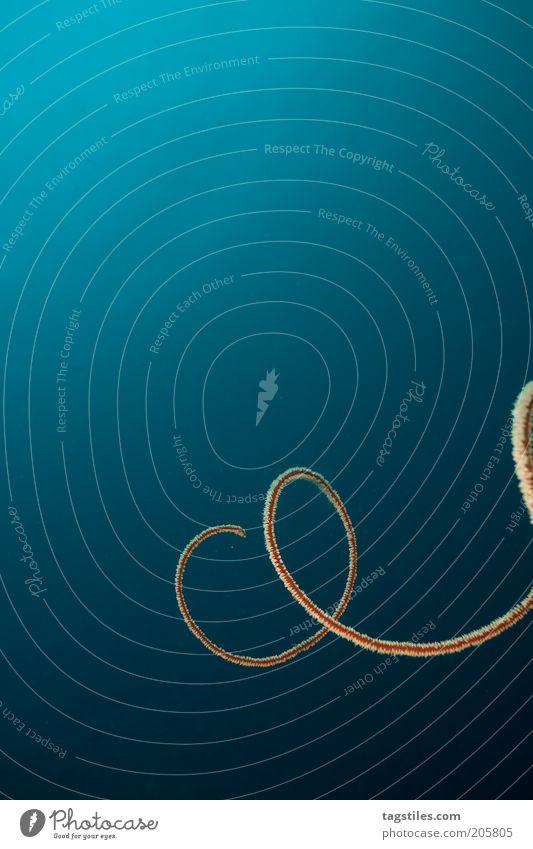UNENTSCHLOSSEN Meer blau ruhig tauchen tief bizarr Spirale Schleife Schwung Unterwasseraufnahme kreisen Korallen Schlaufe Meerestiefe geschwungen Tier