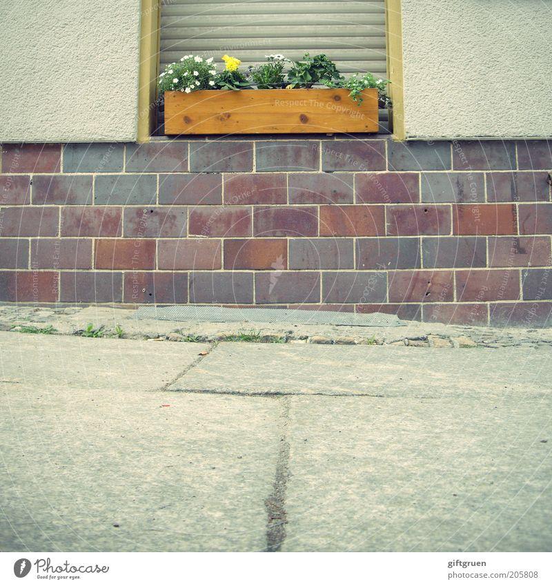 passing by Blume Haus Wand Fenster Holz Stein Mauer Deutschland Fassade Ordnung Sauberkeit Backstein Bürgersteig Bauwerk Putz Heimat