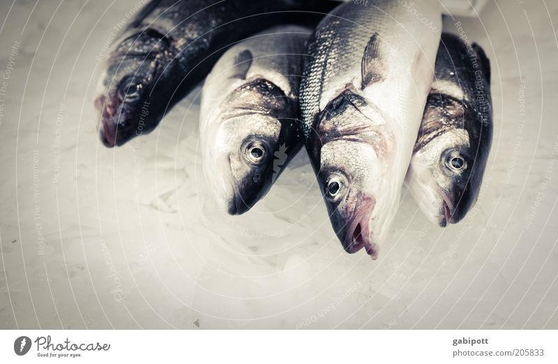 Heute koch ich mal Lebensmittel Fisch Ernährung Totes Tier Schuppen Fischauge 4 grau silber kalorienarm proteinreich Fischgericht Fischmarkt roh Gedeckte Farben