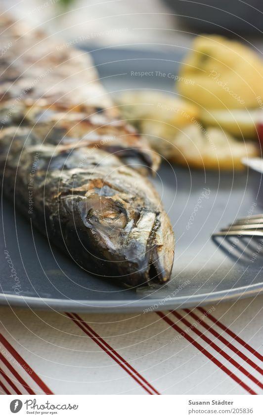 Das Ende einer Makrele Ernährung Lebensmittel Fisch Teller Abendessen Festessen Zitrone Tier Speise Frucht Mahlzeit Protein Slowfood Fischgericht