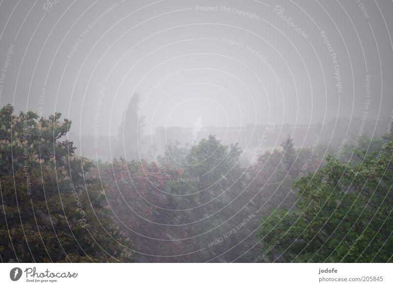 Gewitter Klima schlechtes Wetter Unwetter Wind Sturm Regen Hagel Baum trist Kastanienbaum Farbfoto Gedeckte Farben Außenaufnahme Luftaufnahme Menschenleer