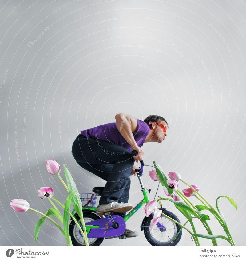 """""""Oranje boven!"""" Lifestyle Freizeit & Hobby Fahrrad Mensch Mann Erwachsene 1 30-45 Jahre Umwelt Natur Landschaft Pflanze Tulpe Accessoire Brille Erholung fahren"""