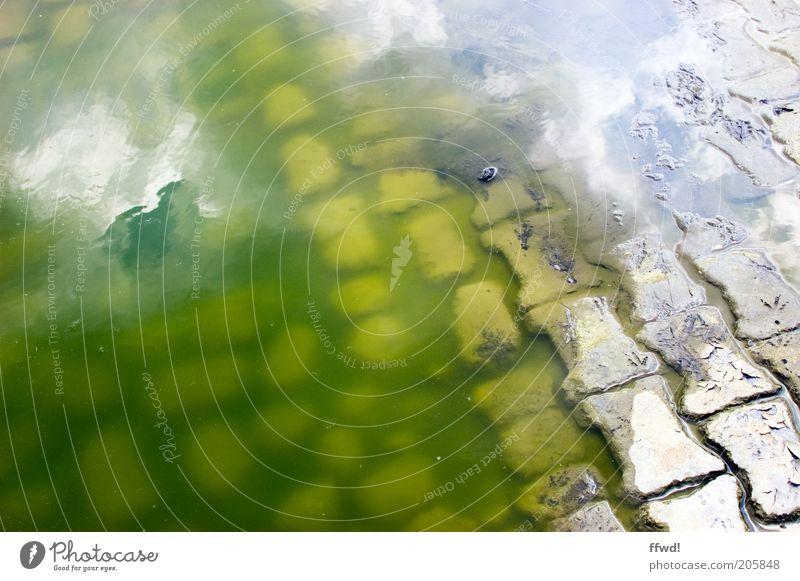 Auf ins kühle Nass! Umwelt Wasser Pflastersteine dreckig Ekel grün Verfall Pfütze umfallen Algen Farbfoto Außenaufnahme Tag Reflexion & Spiegelung