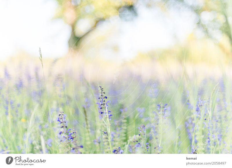 Es blüht! Leben harmonisch Wohlgefühl Erholung ruhig Freiheit Umwelt Natur Pflanze Sommer Schönes Wetter Blume Gras Wildpflanze Wiese Blühend Wachstum