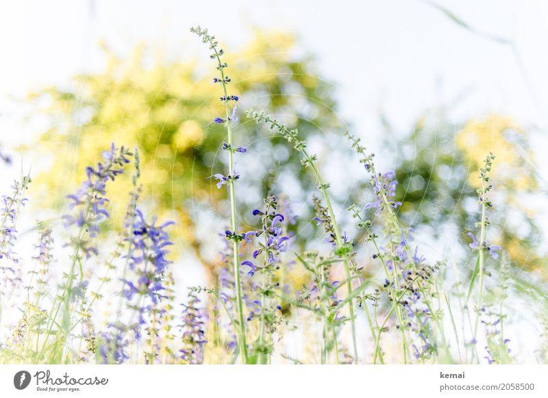 Es blüht! Leben harmonisch Wohlgefühl Sinnesorgane Erholung ruhig Freiheit Umwelt Natur Pflanze Wolkenloser Himmel Sommer Schönes Wetter Baum Blume Blüte
